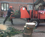 Tree Work Leicester