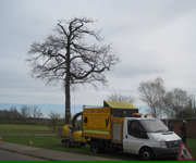 Tree Surgeons Leicester
