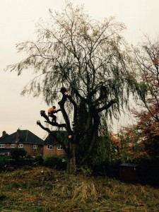 Tree Surgery Leicestershire