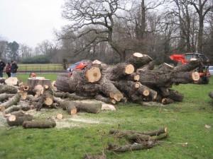 Tree Surgery