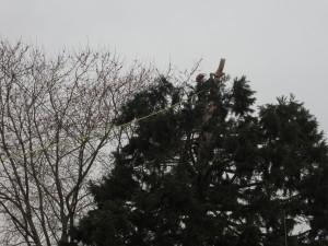 treecutting072