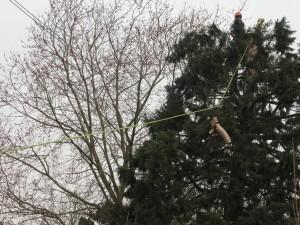 treecutting073